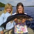 walleye-cover-pic