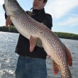 "Zach Johnson with a fat 43.5"" Northern Pike from Lac Seul"